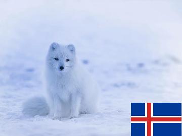 一般的 アイスランド語