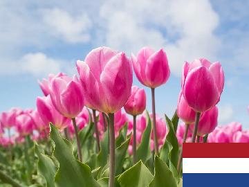 オランダ語 会話
